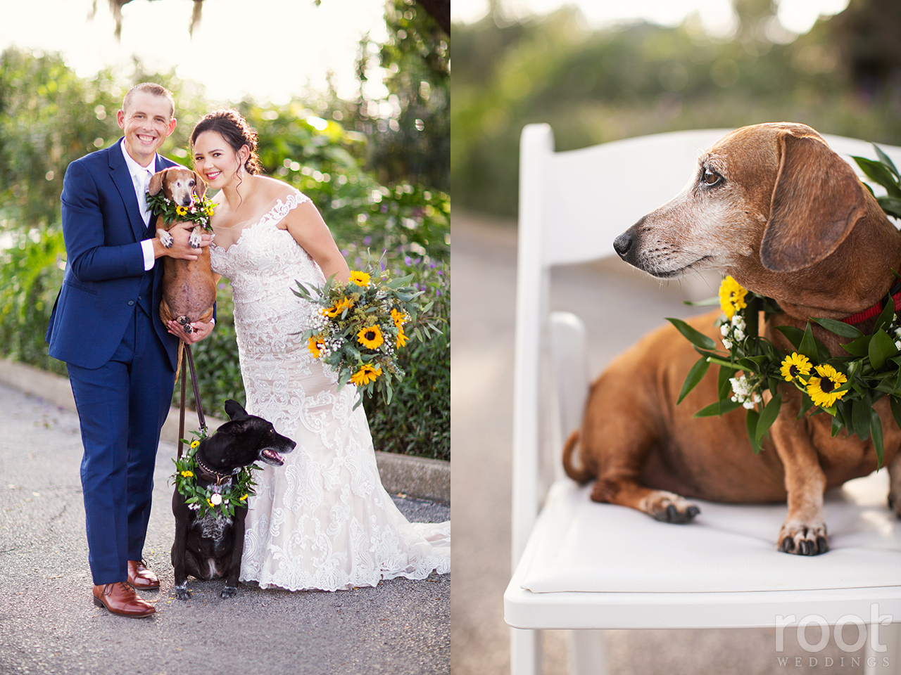 A bride and groom pose with sunflower bouquet and their dogs