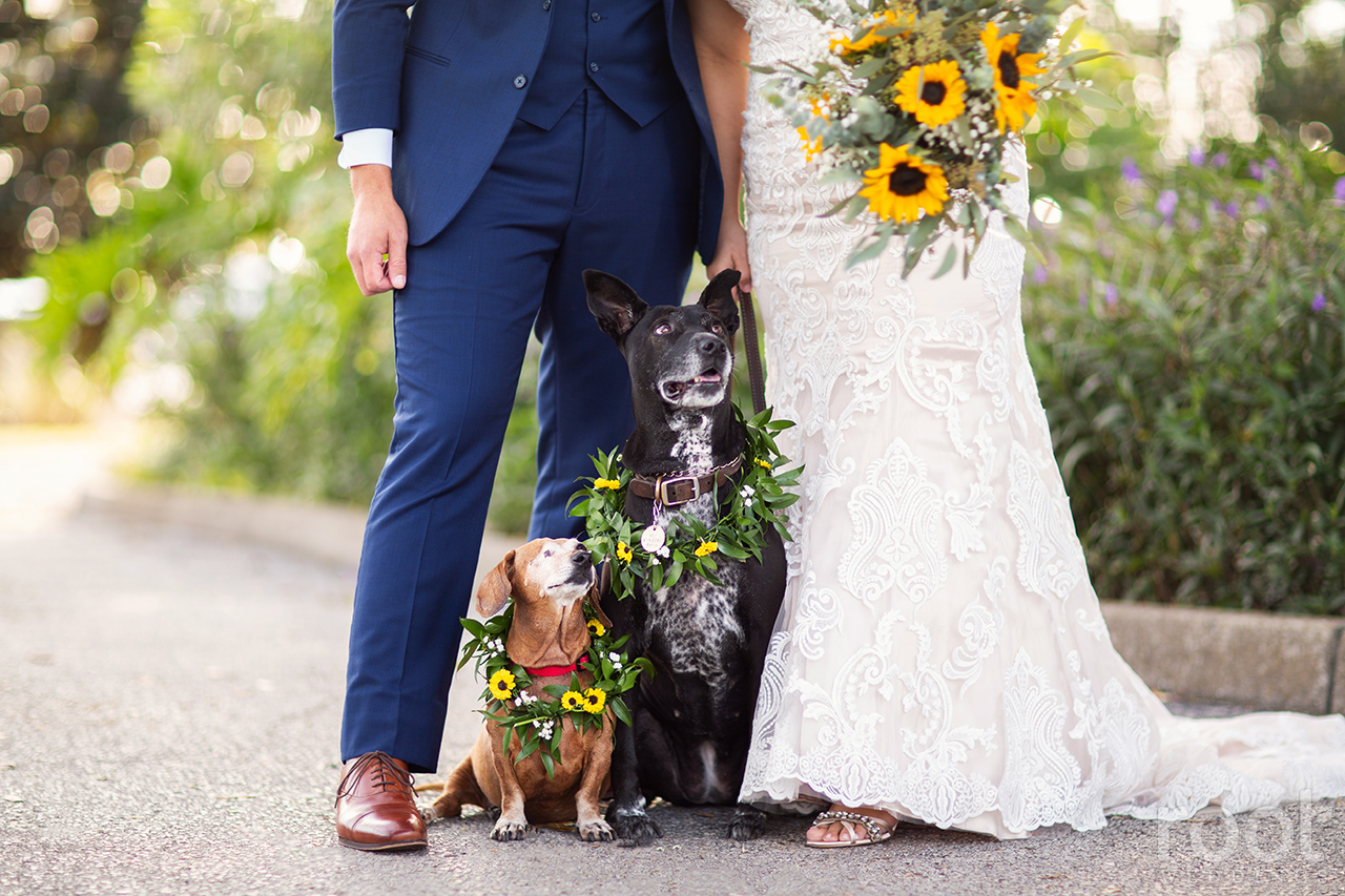 Dogs on a wedding day
