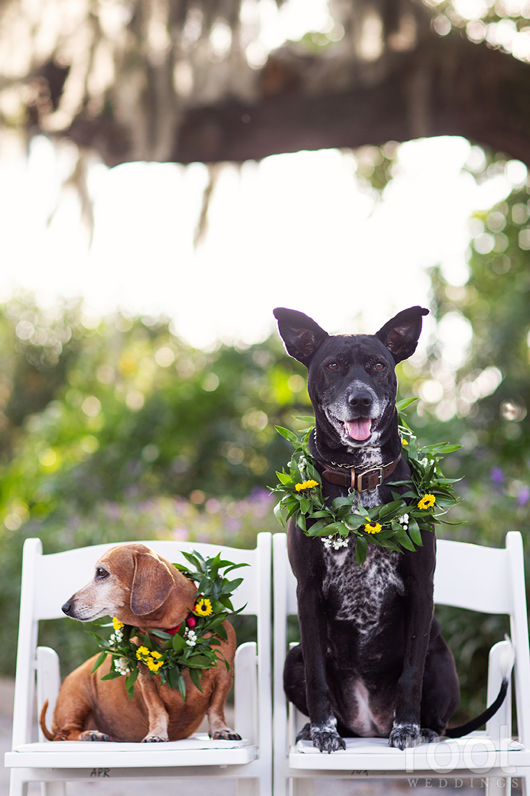 Dogs with floral wreaths sitting on white chairs