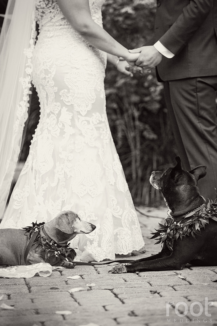 dogs watching their owners get married
